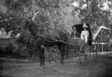 Couple in horse-drawn buggy